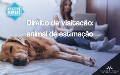 Direito de visitação: Animal de estimação